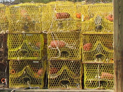 Crab Pots (Atlantic blue crabs)
