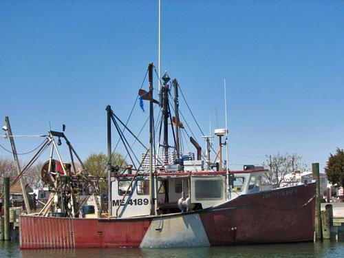 Novi Boat (multi use)