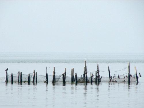 Pound Net (Chesapeake Bay)
