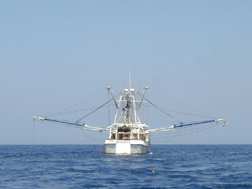 Bottom Trawler fishing