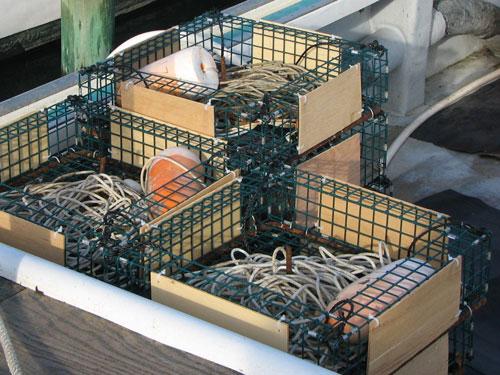 Wire Mesh Conch Pots