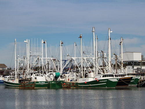 cape may new jersey commercial fishing boats