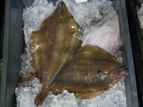 Yellowtail Flounder