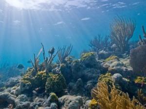 caribbean-coral reef